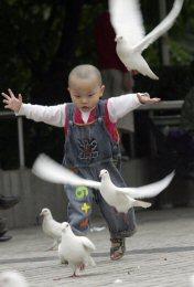 600303_070727_pigeons_05.jpg