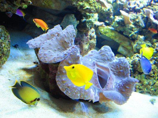 588806_090204_aquarium2.jpg