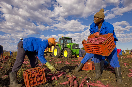 Why is Saudi Arabia buying up African farmland? – Foreign Policy