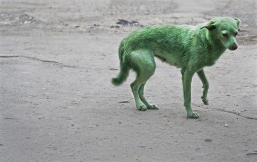 581601_090828_greendog2.jpg