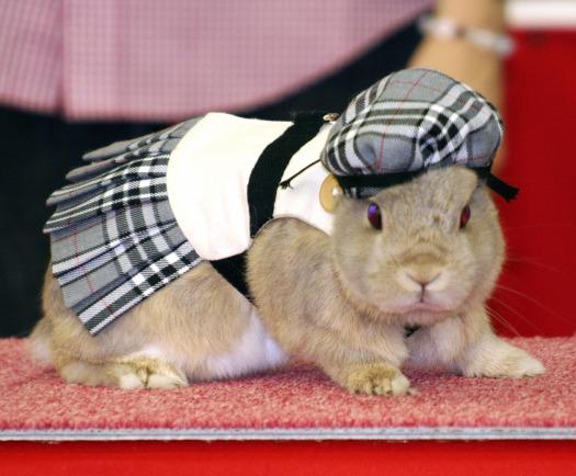 578406_091023_bunny2.jpg