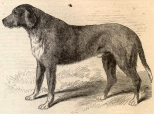 Illustration from Harper's Weekly, 1862