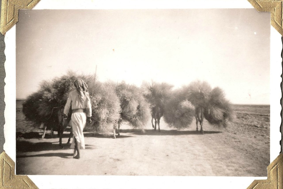 A man walks behind donkeys.