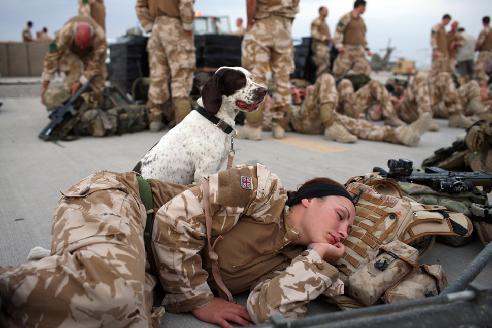 """In spring 2010, the Royal Army  Veterinary Corps, which has officially employed canines since 1942, established  the 1st Military Working  Dog Regiment, a new unit that consists of  """"284 soldiers and officers and about 200 military working dogs."""" These teams  have supported operations in Afghanistan, Bosnia, Iraq,  Kosovo, and Northern Ireland, according to the British military.      In 2011, there were 70 military dogs at Camp Bastion, Britain's largest  military base in Afghanistan. Britain's arms and explosives dogs are  mostly labradors and spaniels, but the Telegraph  reports  that """"some of the best Army dogs are crossbreeds"""" and  """"nearly one third come from private homes."""" When they're not on  patrol, these dogs are housed in air-conditioned kennels that come fully  equipped with an independent power source. The dogs even have the only pool on  base -- all to themselves -- and soccer star David Beckham has stopped by for a visit.      Perhaps one of the most moving  war-dog stories to come out of Afghanistan is that of Cpl. Liam Tasker and his  working dog, Theo. When Tasker was killed by a Taliban  sniper in 2011, Theo, who survived the ambush without injury, died only hours  later. The cause of death was never determined, but some surmised that the bond  between the two had been so strong that the dog died of a broken heart.      In this photo, arms- and explosive-detection  dog Leanna watches over her handler Lance Cpl. Marianne Hay, a soldier in the  Royal Army Veterinary Corps, as she rests on Aug. 3, 2008, at the Kandahar Air  Field in Afghanistan.      Marco Di Lauro/Getty Images"""