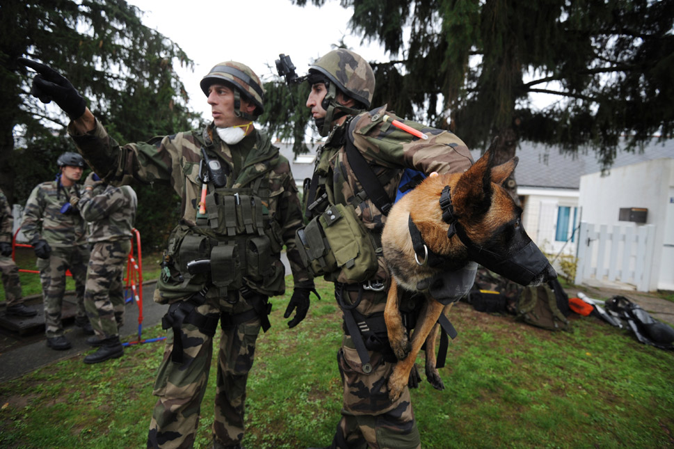 """In France, they're known as chiens du guerre, and these military working dogs make up the 132e  Bataillon Cynophile de L'Armee de Terre, a regiment that services three branches:  Army, Air Force, and Marines. The program is based out of Suippes, France, with  the basic mission to """"train an inseparable man-dog duo to provide specialized  support to all infantry units,"""" according to the French military. Each year,  the battalion adds roughly 250 new dogs to its ranks.      The most recent  war-dog news to come out of France's canine command is the unfortunate  death of Fitas, a Belgian Malinois who became famous after for his heroics in  Afghanistan. On April 12, 2011, he interrupted an ambush and held the intruders  at bay while alerting French troops to the danger. Unfortunately, he was captured  and then held captive by the Taliban for months before finally returning to his  unit in August 2011. According to the French Army's Facebook page, Fitas succumbed to illness  on April 17.      Above, French soldiers prepare their sniffer  dog to search an underground tunnel for explosives caches during an exercise on  Oct. 5, 2010, in Angers, France.      FRANK PERRY/AFP/Getty Images"""