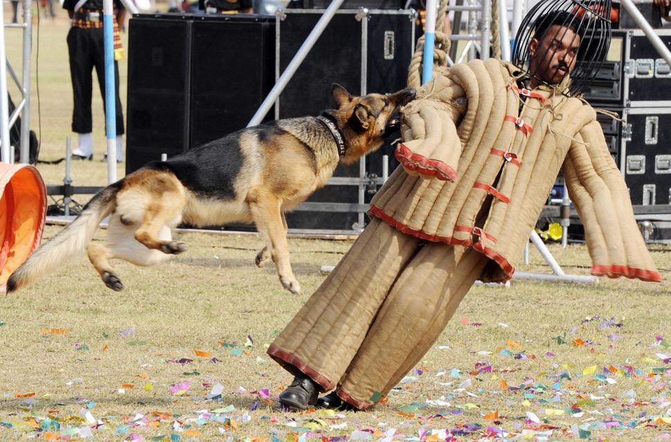 """After the terrorist attacks in Mumbai in 2008, the demand  for bomb-sniffing dogs in India rose so fast the country could not keep up with  requests. The Washington Post  reported  that prior to the attacks,  the Indian army had used canines primarily in restive Kashmir and Punjab. """"But  as insurgents and terrorists expand their targets across the country,"""" the  paper wrote, """"dogs are also being deployed to malls, metro stations, luxury  hotels and other public places in India's booming new cities.""""      Two years after the Mumbai attacks, the  need had yet to be filled.  In 2010, """"New Delhi's police department has 32 sniffer dogs and [had] ordered  50 more ... Major airports [had] increased the number of sniffer dogs by at least  50 percent since 2008,"""" according to the  Post.      Few as they may be, these canines are highly regarded in  India. As sub-Inspector Digvijay Singh told the Post, """"These dogs are patriotic Indians. They are better than  our men, because they don't take bribes.""""      Here, Indian soldiers show off their  trained canines at Polo Grounds in Secunderabad on Jan. 8, 2010.      NOAH SEELAM/AFP/Getty Images"""