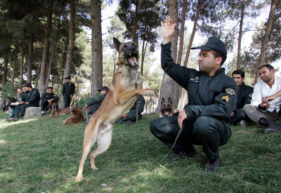 """In 2010, Iran banned  the ownership of canines outright. """"Friendship  with dogs is a blind imitation of the West,"""" said Grand Ayatollah  Naser Makarem Shirazi. And  while he acknowledged that the Quran doesn't prohibit keeping such pets outright,  he went on to say, """"We have lots of narrations in  Islam that say dogs are unclean.""""      But pragmatism might be winning out over the desire to stamp  out Western influences in Iran. In 1999, after France donated a team of five of  canines for border-control tasks, Iranian clerics issued  a fatwa permitting the use of drug-sniffing dogs. As opium production in  neighboring Afghanistan has ramped up, Iran's canine forces have since grown to  approximately 100 dogs. From  March 2010 to March 2011, 33 tons of drugs were sniffed out by canines and  seized.      Even President Ahmadinejad has high-priced, bomb-sniffing  dogs on his security team, a measure of protection that has ruffled  more than a few feathers. The dogs, which came from Germany and reportedly  cost $150,000, brought domestic criticism. One hard-line website said their  presence """"contradicted the president's image as a 'simple-life,  justice-seeking, anti-luxury' leader.""""      Above, Iranian  policeman sit with their sniffer dogs during a ceremony marking International  Anti-Drugs Day in Tehran on June 26, 2009.      ATTA KENARE/AFP/Getty Images"""