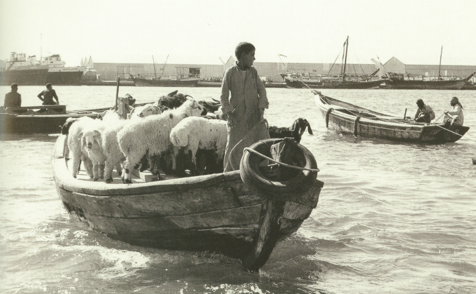 Livestock are transported by dhow from Deira to Bur Dubai.