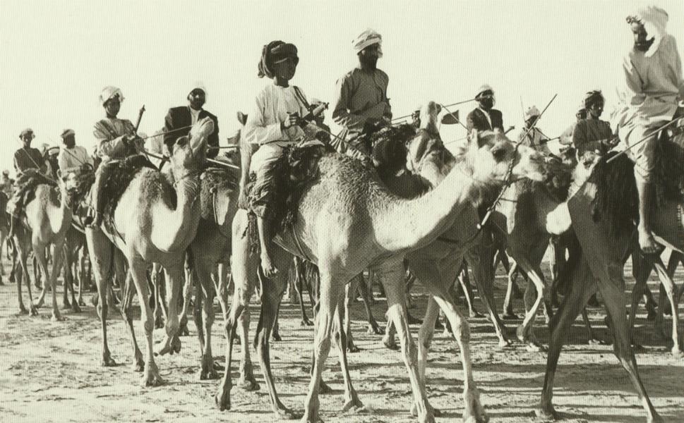 A camel caravan ambles through Dubai.