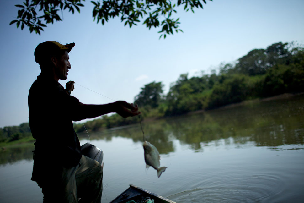 Vincente Morales, a park ranger  employed by the government to patrol the Tipnis park for almost a  decade, pulls a fish from the river. Vincente recently marched in protest against the planned highway. He expects to  lose his job, but says that despite the risk, he will continue to fight against the highway.