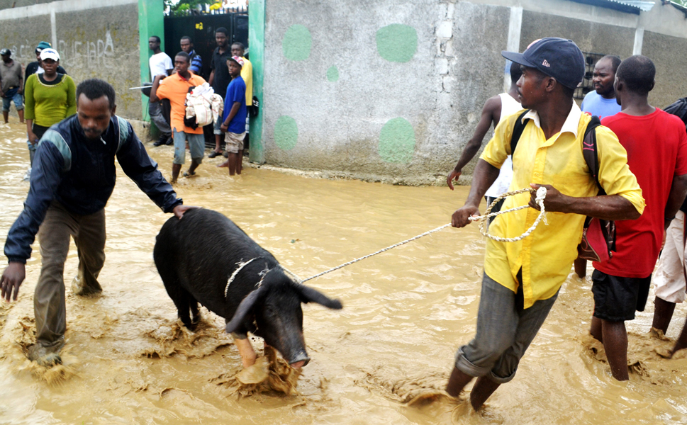A man pulls a pig  along a flooded street in Port au Prince, Haiti, on Oct. 25. The same  storm that struck fear into Manhattan hit the unlucky country of Haiti early  last week. As many people are still living in tent cities and temporary housing  after the 2010 earthquake, the country was ill-equipped to handle any kind of  severe weather. At least 52 people have died in Haiti due to heavy rains  caused by Hurricane Sandy, and health officials fear a cholera  outbreak as the storm waters recede.