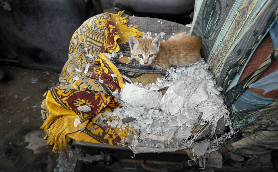 A cat sits on the seat of a car damaged by Israeli airstrikes in Gaza   City on Nov. 18.