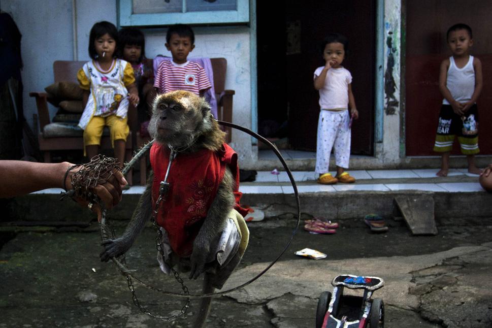 563777_131022_monkey112.jpg