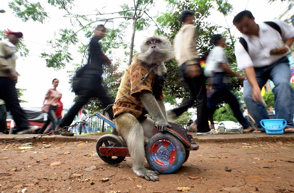9429_131022_monkey12.jpg