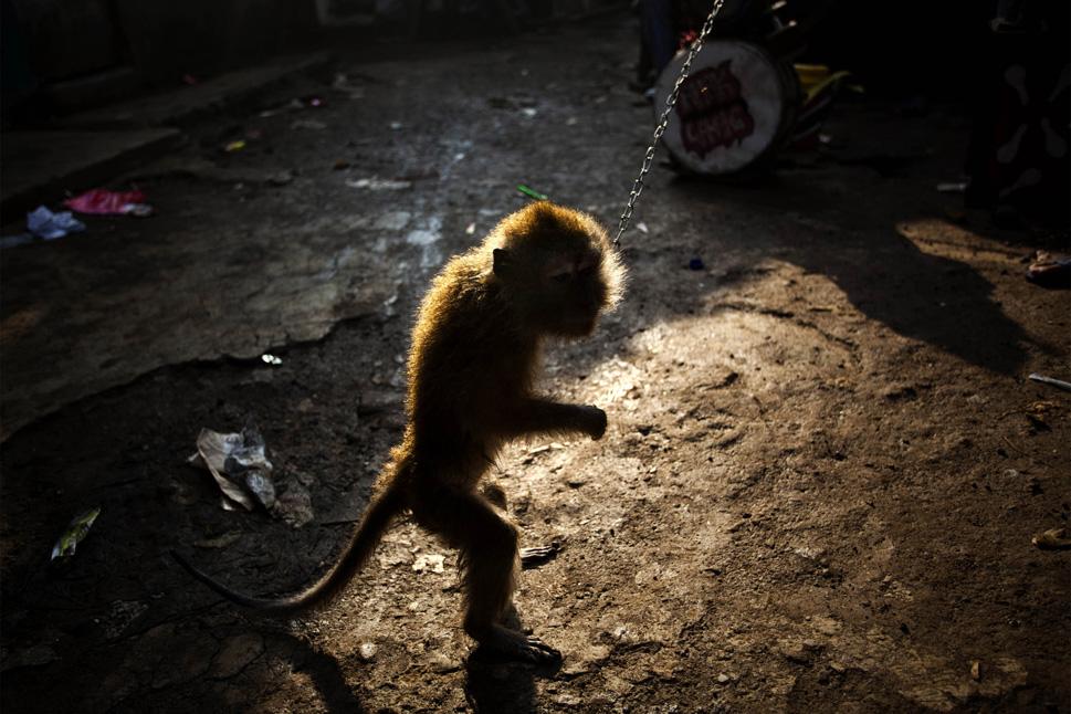 9430_131022_monkey13.jpg