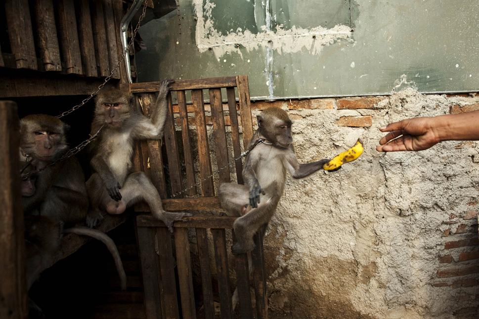 563773_131022_monkey62.jpg