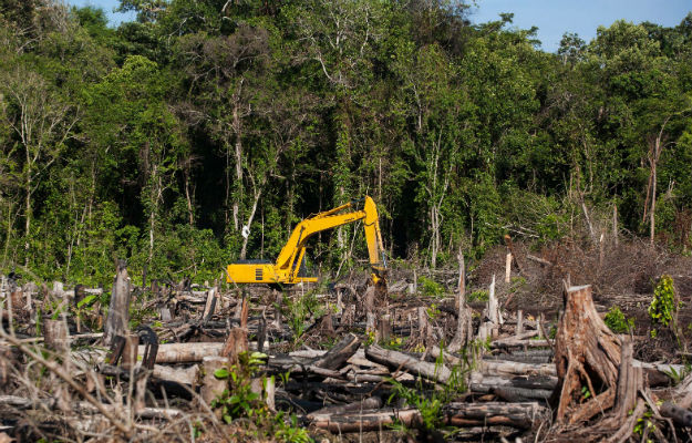 Could Dumping Trans Fat Kill the Rainforest? – Foreign Policy