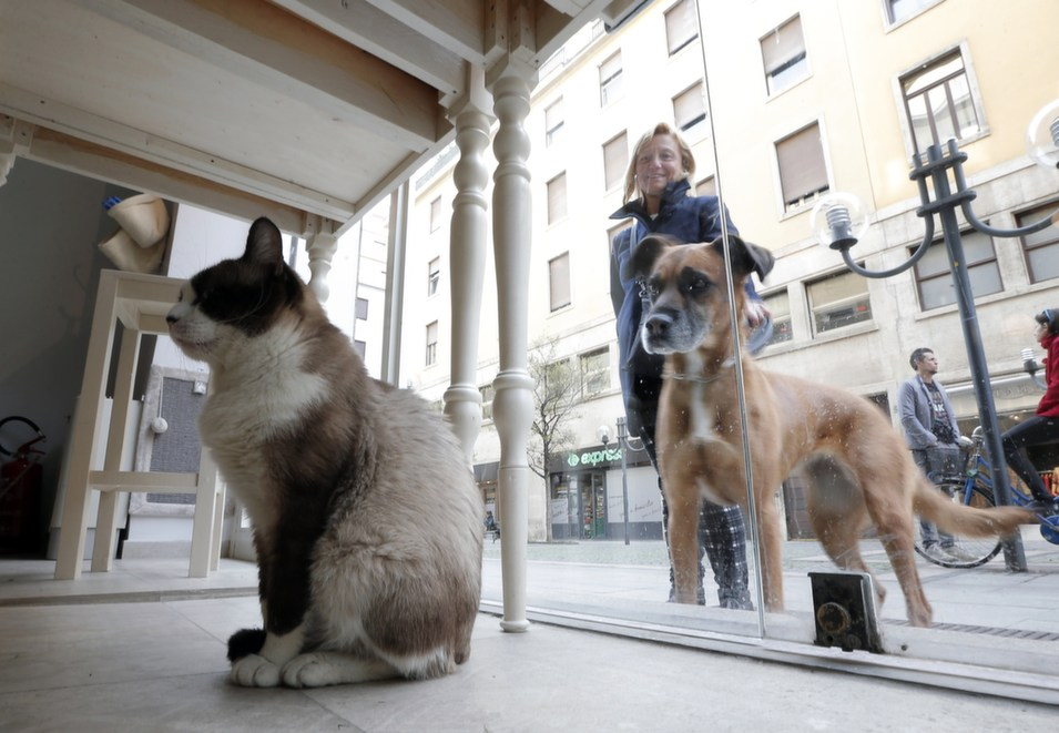 A dog looks at a cat  sitting inside the Miagola Cafe in Turin, on March 22. The newly opened Miagola  Cafe is a concept bar where cats and human beings can have a drink and relax.  The first cat cafe was opened in Taiwan in 1998, followed by others in various  European cities such as Budapest, Berlin, Munich, Paris, and Madrid.       MARCO  BERTORELLO/AFP/Getty Images