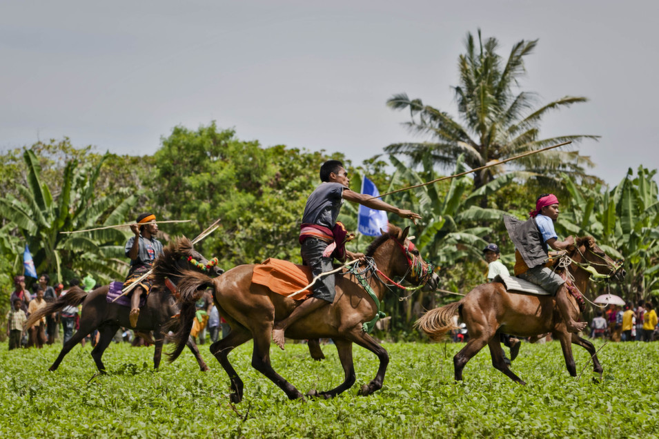 A Pasola rider throwing  his spear during the Pasola war festival at Ratenggaro village on March 22, in  Sumba, Indonesia. The Pasola Festival is an important annual event to welcome  the new harvest season. Pasola, an ancient ritual fighting game,  involves two teams of men on horseback charging towards each other while trying  to hit their rivals with pasol javelins and avoid being hit themselves.      Ulet Ifansasti/Getty  Images