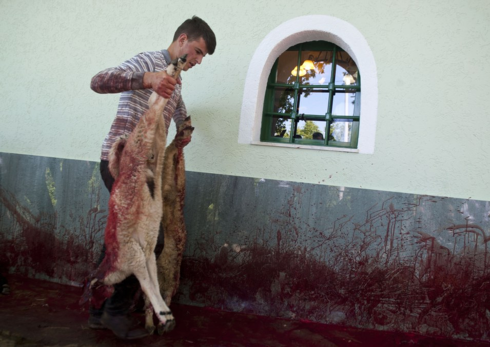 A Kosovo Albanian man carries a slaughtered sheep in the  village of Babaj Bokes on May 6, during the celebration of the traditional  feast of Saint George's Day, which is observed by several nations, kingdoms,  countries, and cities of which Saint George is the patron saint.       ARMEND NIMANI/AFP/Getty Images