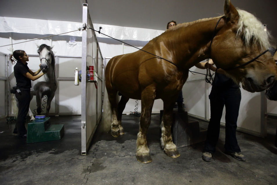 Grooms tend to a horse during a media preview of the acrobatic spectacular, Cavalia: A Magical Encounter Between Human and Horse on Aug. 4 in Singapore.       Suhaimi Abdullah/Getty Images