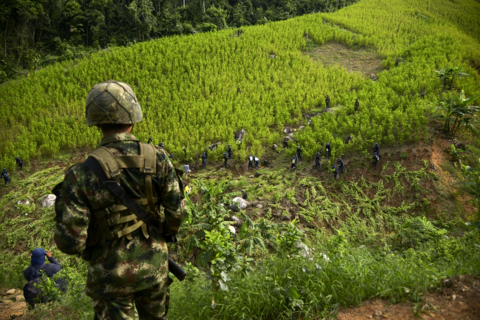 A Colombian soldier watches as peasants dismantle a coca plantation in the mountains northeast of Medellin, Colombia, on Sept. 3.       Raul Arboleda/AFP/Getty Images