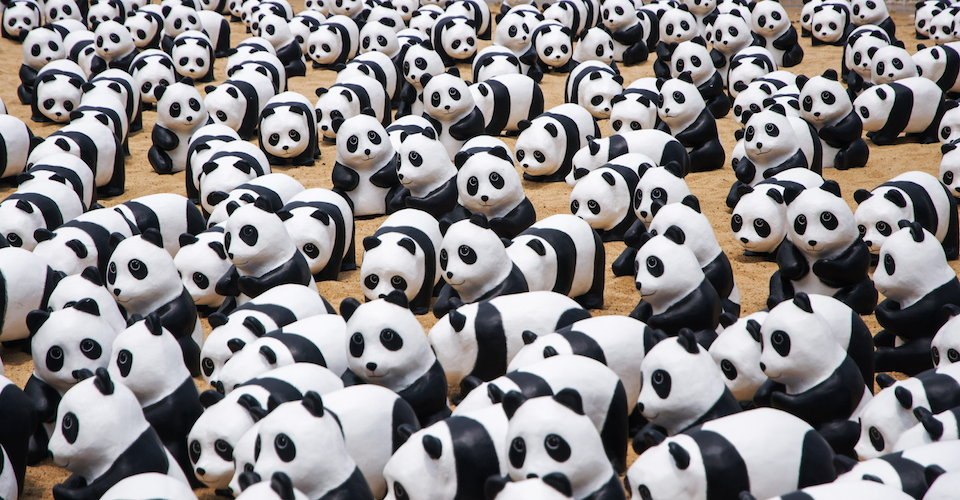 Chinese People Used To Think Pandas Were Monsters Foreign Policy