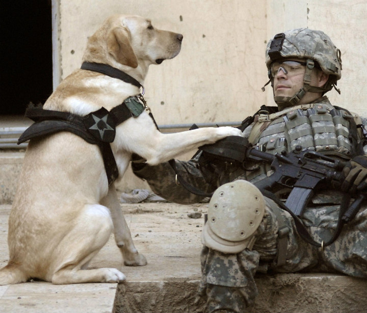 Tom's dog of the week: A photo I like – Foreign Policy