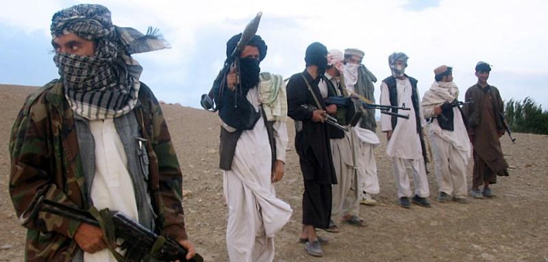 taliban crop