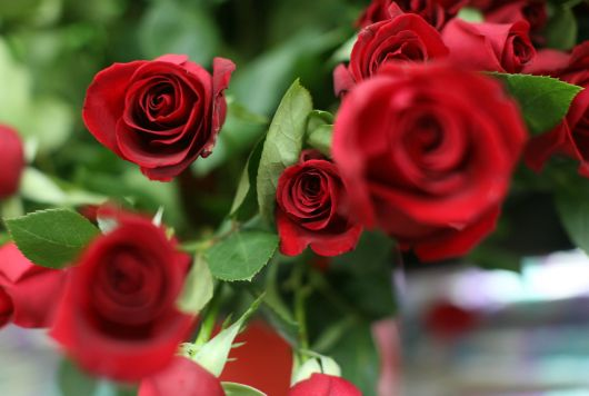 Sluggish Economy Dampens Flower Sales For Valentine's Day