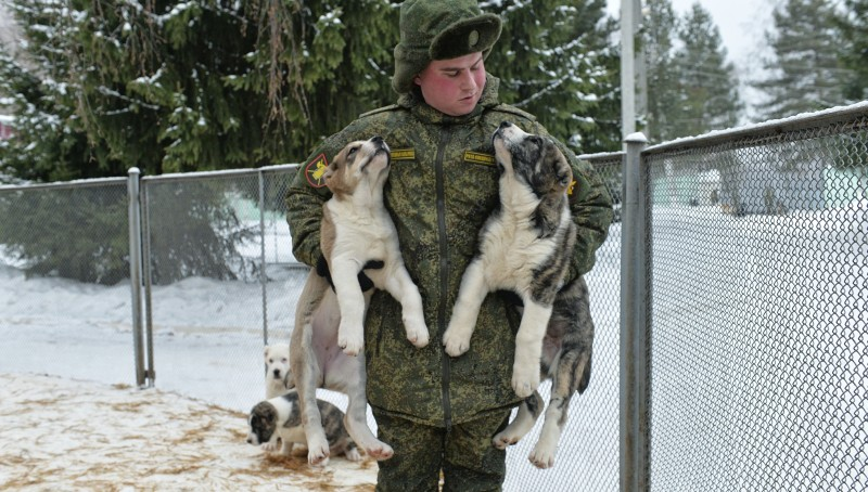 DMITROV, RUSSIA - JANUARY 30: Training of military cynologists in dogs nursery 'Red Star' in Knyazhevo village about 80 km away from Moscow on January 30, 2015 in Dmitrov, Russia. (Photo by Pyotr Kassin/Kommersant Photo via Getty Images).