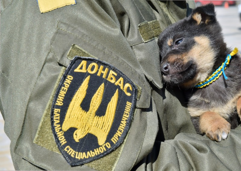 A fighters of the Ukrainian Donbass volunteer battalion holds a puppy with a colar featuring colors of the Ukrainian flag on March 17, 2015 during a farewell ceremony in the center of Kiev before their departure for the east of the country to take part in anti-terrorists operation (ATO). Three soldiers were killed and five injured in eastern Ukraine, an army spokesman said on March 17, further undermining a month-old ceasefire between government forces and pro-Russian separatists.  AFP PHOTO/ SERGEI SUPINSKY        (Photo credit should read SERGEI SUPINSKY/AFP/Getty Images)
