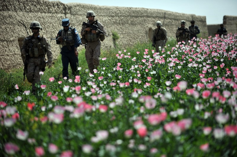 US Marines and Navy Sergeant Trung Tran (L), First Leutenant William Kloth (3L), Corporal Joseph Albrecht (3R) and Hospitalman 3 Dylan Morris (2nd R) from Police Mentoring Team, 2nd and 3rd Light Armored Reconnaissance (LAR) 1st and 2nd Marine Division (Forward) walk through opium poppy fields during a meet and greet joint patrol with Afghanistan National Police in Habibullah village in Khanashin District, Helman province, on April 24, 2011. US Defense Secretary Robert Gates said April 21 it was possible that 2011 could see a decisive turning point in the war in Afghanistan against Taliban insurgents. AFP PHOTO / Bay ISMOYO (Photo credit should read BAY ISMOYO/AFP/Getty Images)