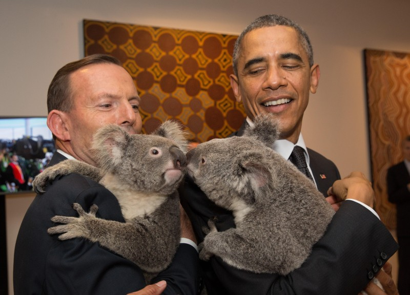 BRISBANE, AUSTRALIA - NOVEMBER 15:  In this handout photo provided by the G20 Australia, Australia's Prime Minister Tony Abbott and United States' President Barack Obama meet Jimbelung the koala before the start of the first G20 meeting on November 15, 2014 in Brisbane, Australia. World leaders have gathered in Brisbane for the annual G20 Summit and are expected to discuss economic growth, free trade and climate change as well as pressing issues including the situation in Ukraine and the Ebola crisis.  (Photo by Andrew Taylor/G20 Australia via Getty Images)