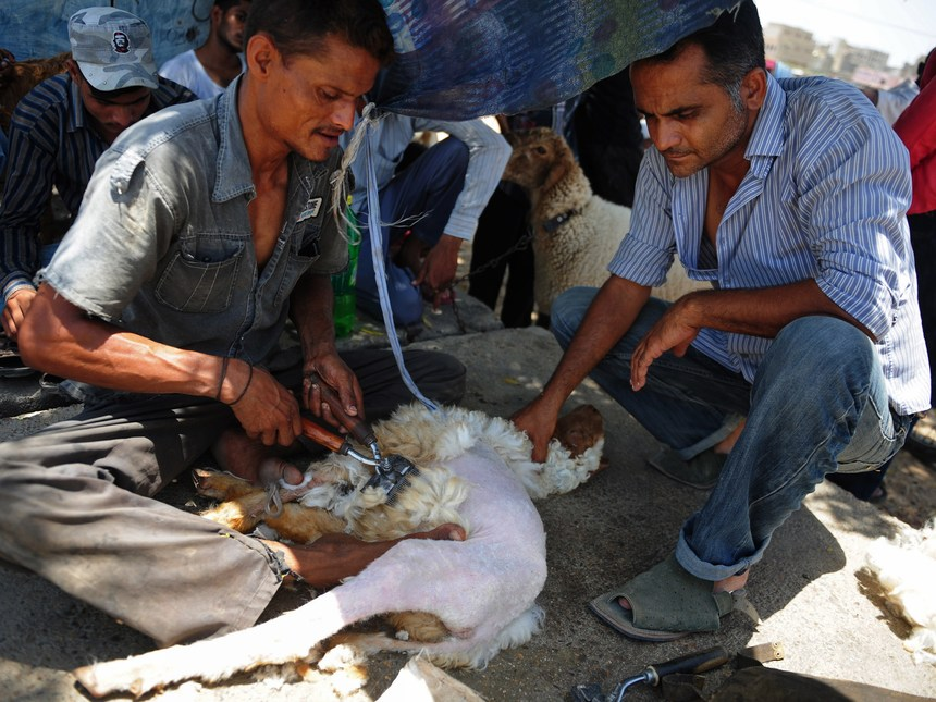A Pakistani man shears a sheep for its wool by a roadside in Karachi on June 15, 2014. Wool from sheep are traditionally used as warm clothing and for use in blankets, carpeting, and insulation. AFP PHOTO/Rizwan TABASSUM        (Photo credit should read RIZWAN TABASSUM/AFP/Getty Images)