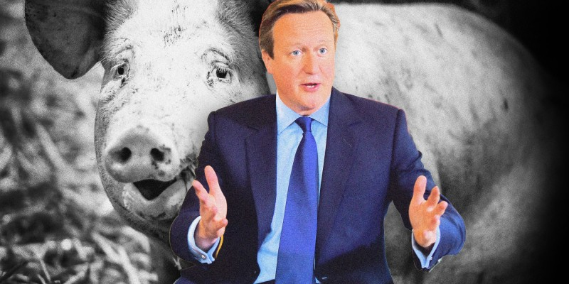 GettyImages-483976706_piggate1