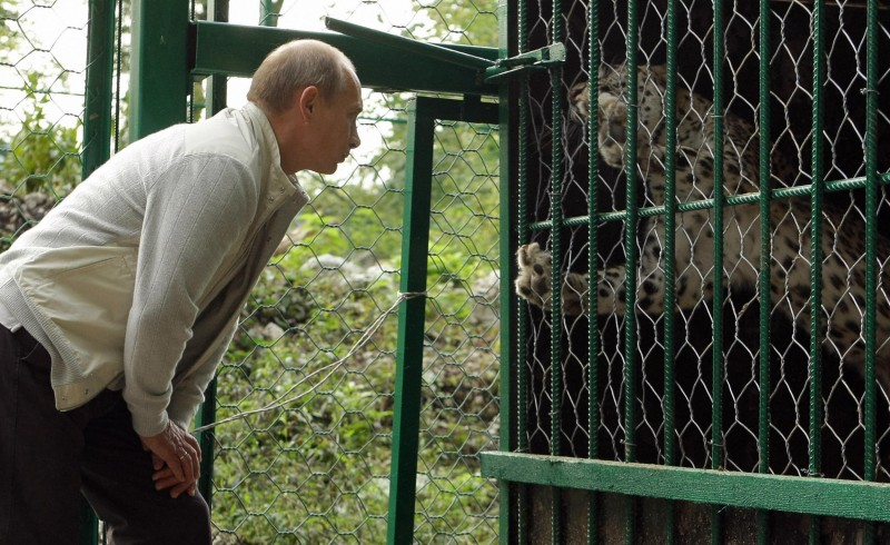 This picture taken on September 19, 2009 shows Russian Prime Minister Vladimir Putin looking at a leopard as he visits the National Park in Sochi. AFP PHOTO / RIA NOVOSTI / POOL / ALEXEY DRUZHININ (Photo credit should read ALEXEY DRUZHININ/AFP/Getty Images)