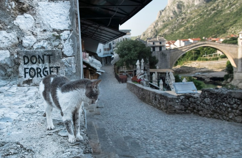 "MOSTAR, BOSNIA AND HERZEGOVINA - JUNE 28:  A cat walks near the Old Bridge in front of a sign ""Don't Forget"" as the city of Mostar remembers the 1993 conflict on June 28, 2013 in Mostar, Bosnia and Herzegovina. The Siege of Mostar peaked in 1993 during the Croat-Bosniak conflict lasting eighteen months as fighting took place as Bosnia and Herzegovina declared independence from Yugoslavia. The city was divided in half between the two battling armies. Mostar, dating back over four hundred years, was mostly destroyed through the fighting. Although reconstruction has slowly commenced in the last decades, evidence of the war remains in bullet ravaged buildings still standing throughout the city.   (Photo by Marco Secchi/Getty Images)"