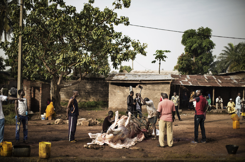 Workers butcher a long horn zebu at a public abattoir in the Muslim district of PK5 in Bangui on December 4, 2015.    The animals, which are ritually slaughtered according to the precepts of Islam, produce the meat that provides for the needs of the enclaved muslim population. / AFP / MARCO LONGARI        (Photo credit should read MARCO LONGARI/AFP/Getty Images)