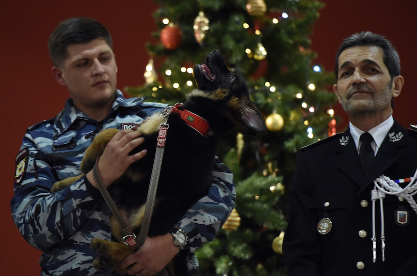 A Russian police officer holds a German shepherd puppy named Dobrynya during a ceremony at the French embassy in Moscow on December 7, 2015. Russia on December 7 handed over a German shepherd puppy named Dobrynya to France in a gesture of solidarity after a police dog named Diesel was killed during a raid on jihadists linked to the Paris attacks in Saint-Denis, suburban Paris, on November 18. AFP PHOTO / YURI KADOBNOV / AFP / YURI KADOBNOV        (Photo credit should read YURI KADOBNOV/AFP/Getty Images)