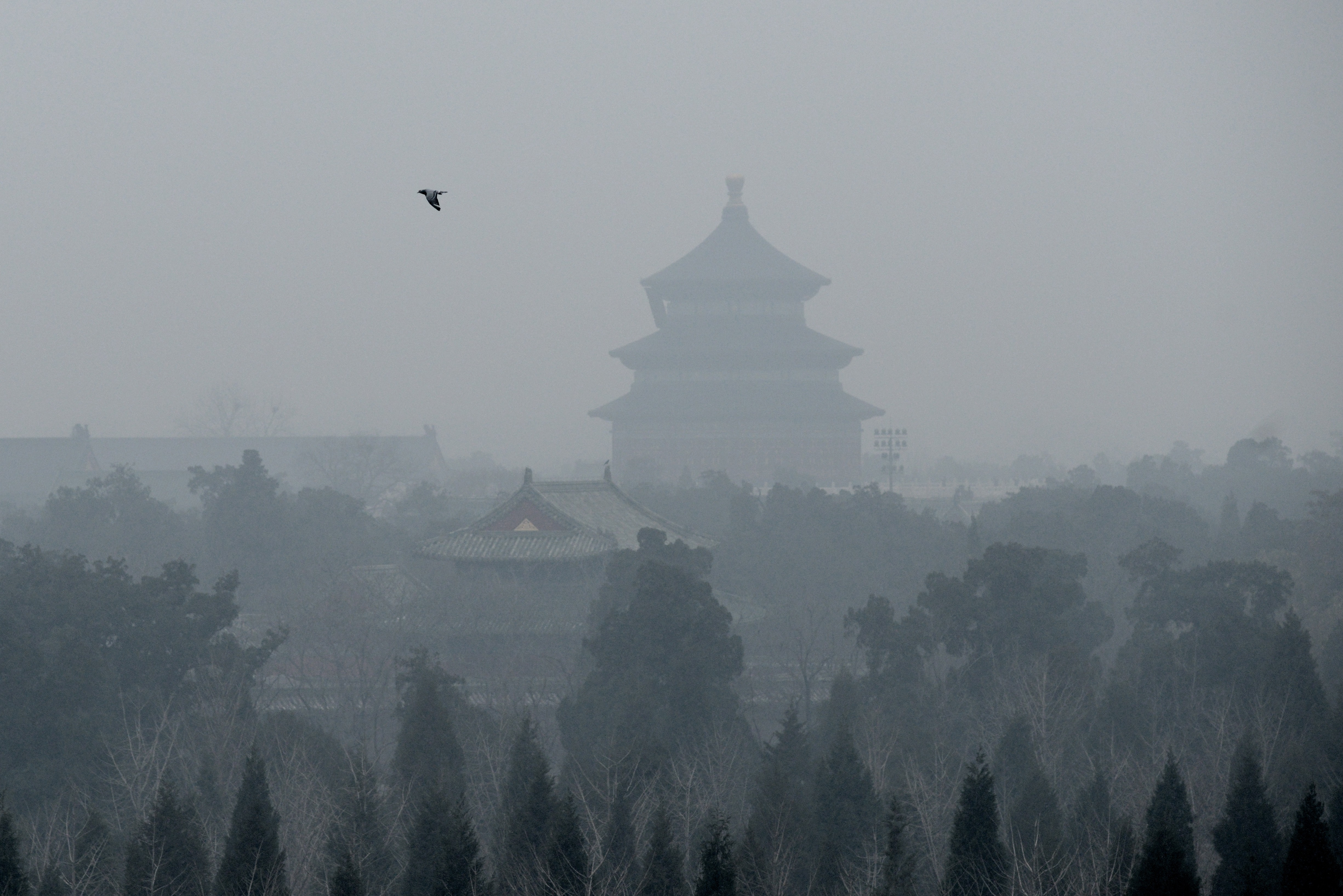 A bird flies over the grounds of the Temple of Heaven amid heavy air pollution in Beijing on December 8, 2015. Half of Beijing's private cars were ordered off the streets on December 8 and many construction sites and schools were closed under the Chinese capital's first-ever red alert for pollution. AFP PHOTO / WANG ZHAO / AFP / WANG ZHAO (Photo credit should read WANG ZHAO/AFP/Getty Images)