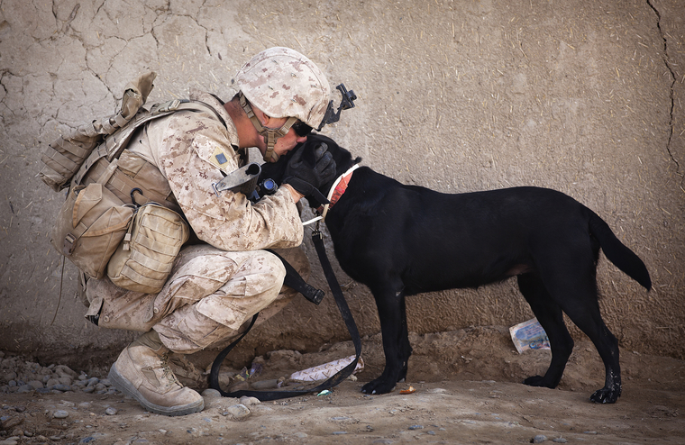 U.S. Marine Cpl. Kyle Click, a dog handler with 3rd Platoon, Kilo Company, 3rd Battalion, 3rd Marine Regiment, and 22-year-old native of Grand Rapids, Mich., shares a moment with Windy, an improvised explosive device detection dog, while waiting to resume a security patrol here, Feb. 27, 2012. On deployment in Helmand province's Garmsir district, the 'America's Battalion' dog handlers and their improvised explosive device detection dogs live, travel and work together. In a combat environment largely devoid of the safety and comforts of home, the energetic Labrador retrievers are neither pets nor expendable objects. They're faithful friends and saviors of Marines. Since arriving here in November, IED detection dogs have found four drug caches and two IEDs.