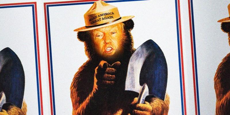 TrumpBear