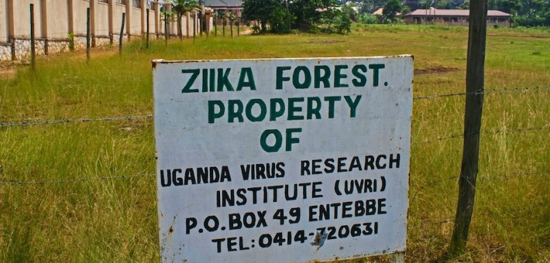 """A picture taken on January 29, 2016 shows a sign post in the Ziika forest in Uganda, near Entebbe. The Zika virus was first discovered in April 1947 after testing a macaque monkey in Ziika forest, Uganda by the scientists of the Yellow Fever Research Institute. The virus is spread by day time active mosquitos. The Zika virus is """"spreading explosively"""" in the Americas and the region may see up to four million cases of the disease strongly suspected of causing microcephaly according to the World Health Organization. Microcephaly is a condition causes babies to be born with an abnormally small head and a neurological disorder called Guillain-Barre syndrome. / AFP / ISAAC KASAMANI        (Photo credit should read ISAAC KASAMANI/AFP/Getty Images)"""