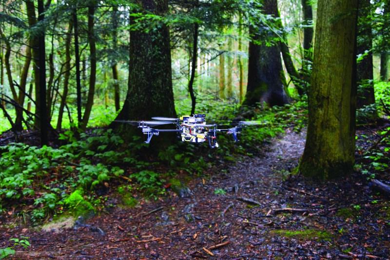 Drohne-erkennt-Waldweg_SW_V1