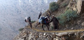 Moroccans and their donkeys head to the village of Taghdouine to buy supplies for their remote village on March 5, 2016 in el-Haouz province in the High Atlas Mountains south of the capital of Marrakesh. When using well-known search engines, one can find very few information about Taghzirt village. And while tourists from all around the world enjoy the sun warm days and the snow-covered view of the nearby mountains from Marrakesh, hundreds of villagers suffer from the harshness of winter and isolation, due to the state of the roads leading to it. Many villagers find it hard to access food, medical health and education. / AFP / FADEL SENNA        (Photo credit should read FADEL SENNA/AFP/Getty Images)