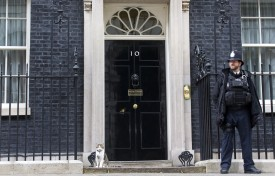 Larry, the cat of British Prime Minister David Cameron, sits on the step outside 10 Downing Street in London on May 9, 2015. Britain awoke to a new political landscape after a shock election victory for Prime Minister David Cameron that decapitated the opposition and bolstered secessionists in Scotland.    AFP PHOTO/JUSTIN TALLIS        (Photo credit should read JUSTIN TALLIS/AFP/Getty Images)