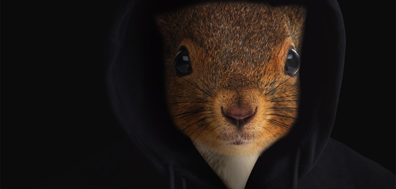 squirrelhack_article
