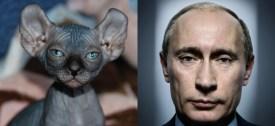 vlad-cat2