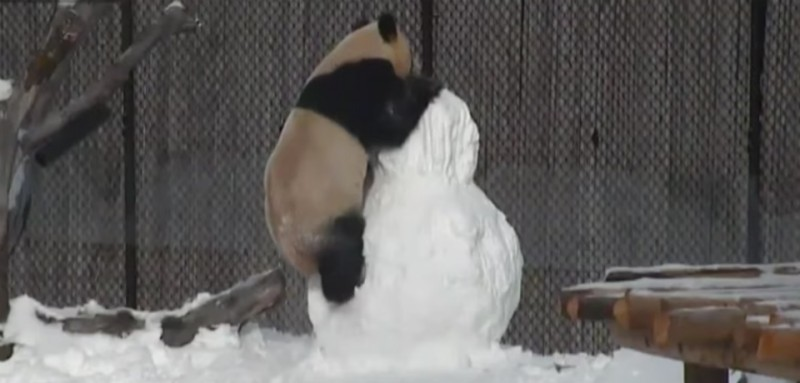 panda-crop